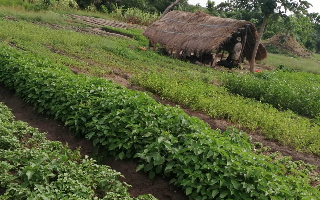 Projet agropastoral – Achat du terrain